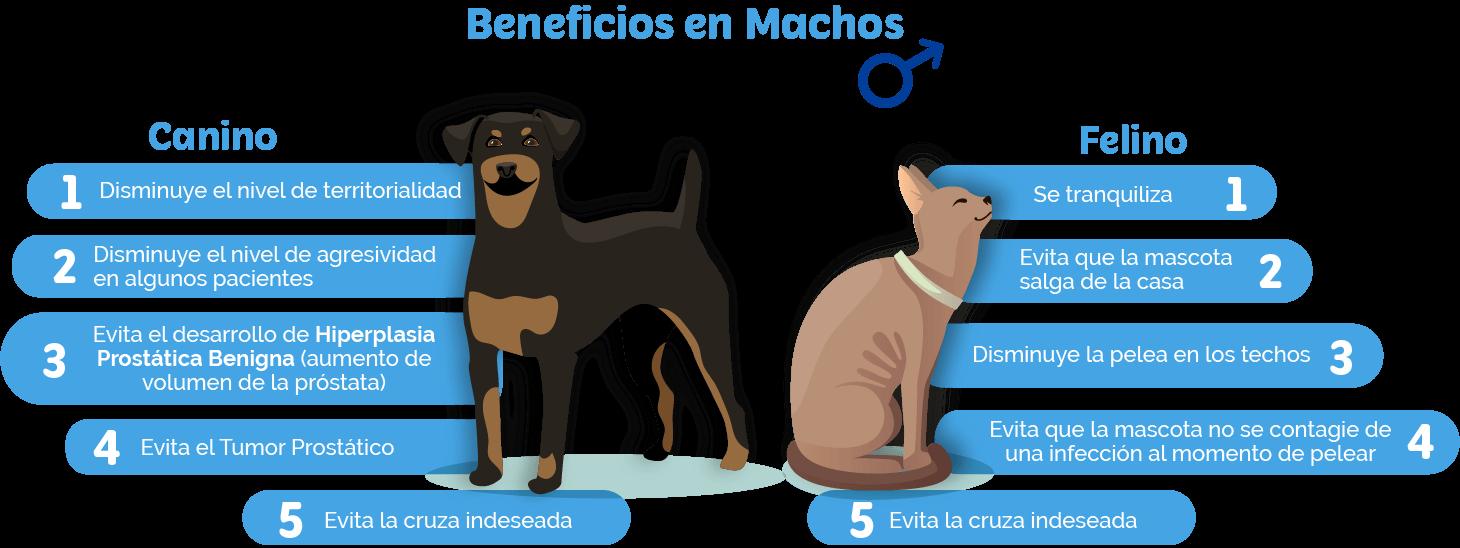 https://vsm.cl/wp-content/uploads/2021/05/Beneficios-macho0-1460x548.png
